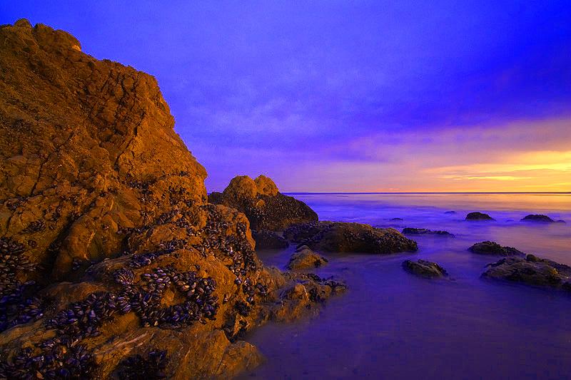 Purple-Seascape