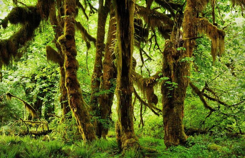 moss tree nude rainforest photo workshop