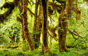 moss and fern filled rainforest from our epic nude workshop